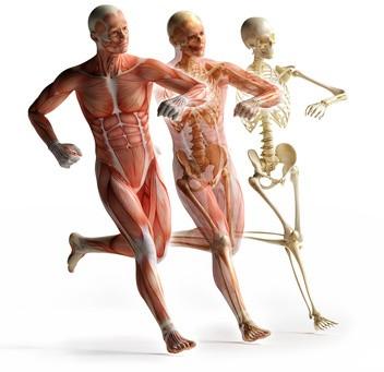 Funktionelle Anatomie am Präparat - physeducation.eu